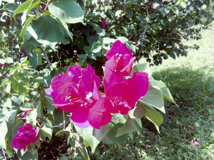 flower Leaf Water Petal Close-up Blooming Petunia Wild Rose Plant Life Botany