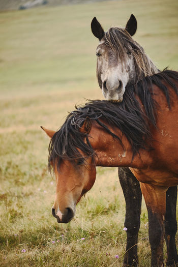 Feral horses, two horses standing next to each other on green fields.