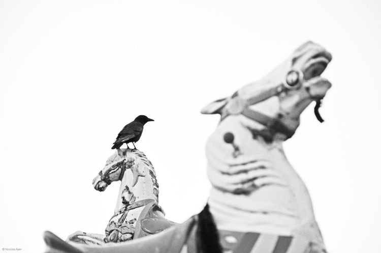Carroussel Carousel Horse Horses Wooden Crow Birds Blackandwhite Black And White The Moment - 2015 EyeEm Awards