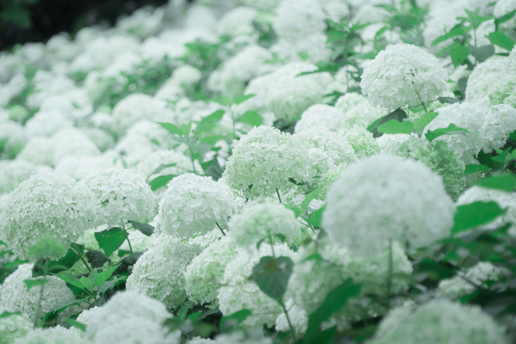 Abundance Backgrounds Beauty In Nature Close-up Cold Temperature Day Food Food And Drink Freshness Frozen Full Frame Green Color Ice Large Group Of Objects Nature No People Outdoors Plant Selective Focus White Color EyeEmNewHere