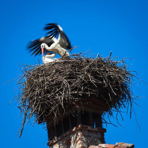 Animals In The Wild Birds Breeding Season Ciconiiformes European White Storks Flayers Long-legged Bird Migratory Birds Monogamy Nature Stork