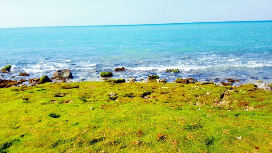 📷🌹🍃 Sky Horizon Over Water Green Color
