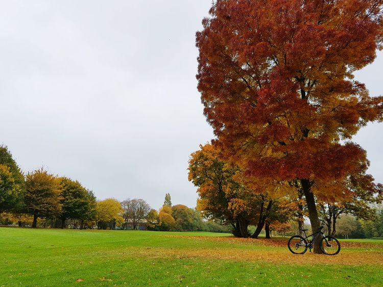 When you feel like giving up, just remember why you started. Tree Nature Grass Outdoors Sky No People Day Emotions In A Picture Bicycle Journey London Lifestyle United Kingdom Autumn Lieblingsteil