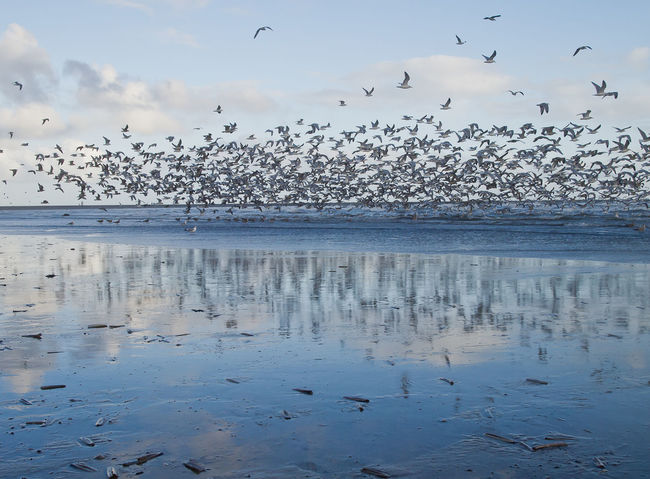 Beach Bird And Beach Bird And Beach Scape Bird Reflections In Sea Birds Flying Over Water Nature Seascape Sky Water