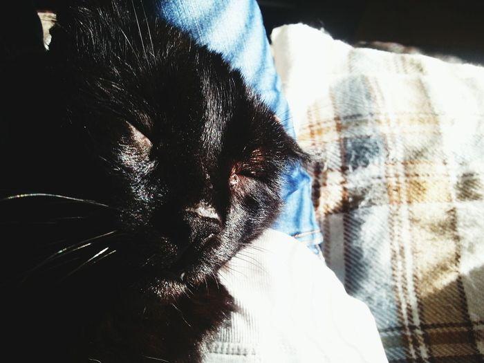 Mishi Love My Cat