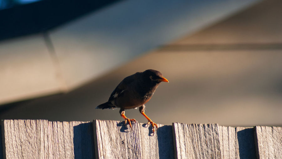 Bird One Animal Animal Animal Themes Vertebrate Wood - Material Animal Wildlife Perching Animals In The Wild Boundary Fence Focus On Foreground Day No People Barrier Robin Outdoors Nature Wooden Post Shadow Post Small