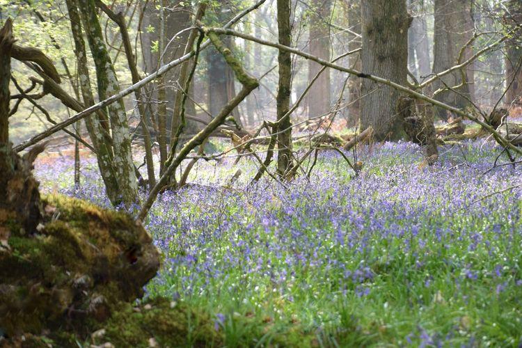 Fresh purple flowering plants in forest