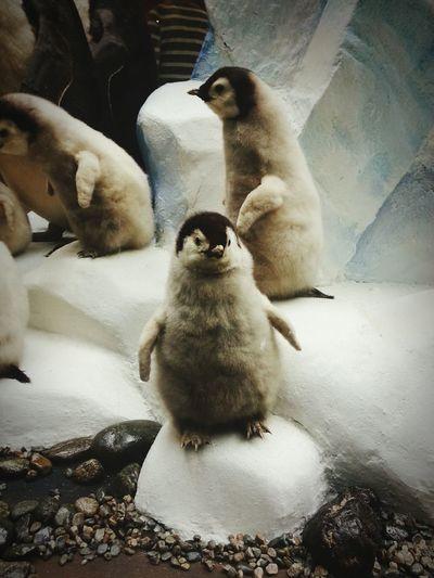 Дарвиновский_музей пингвин мило экспонат