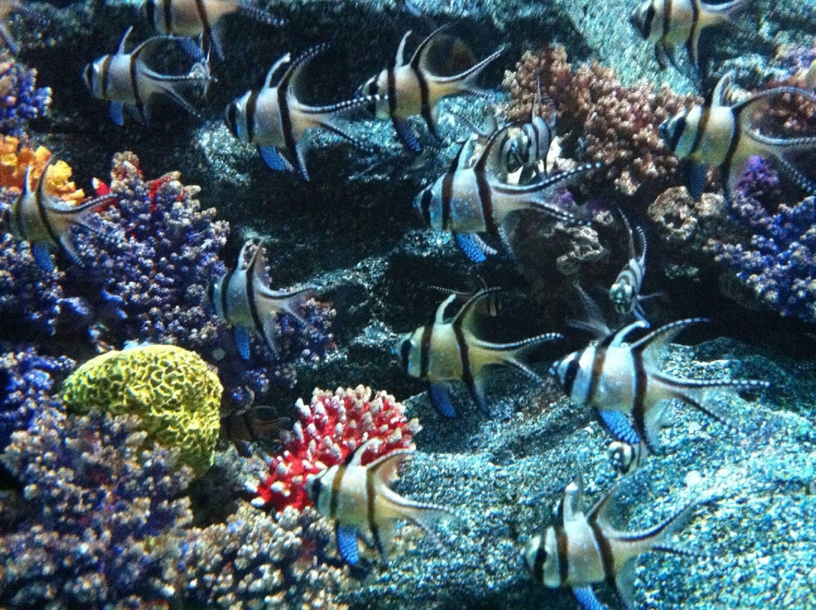 fish, sea life, animal themes, underwater, water, swimming, undersea, coral, wildlife, animals in the wild, high angle view, school of fish, abundance, nature, aquarium, sea, variation, no people, medium group of animals