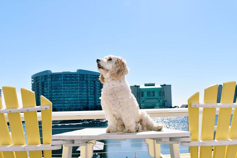 Dog sitting on chair against blue sky