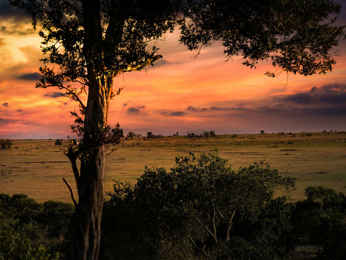 Africa Landscape Evening Light Nature Tranquility Africa Beautiful View Beauty In Nature Beauty In Nature Growth Landscape Landscapes Nature No People Outdoors Peaceful Scene Romantic Sky Scenery Scenics Sky Sunset Tranquil Scene Tranquility Tranquility Scene Tree Tree Trunk