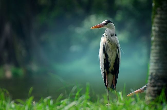 Animal Themes Animals In The Wild One Animal Nature Bird Focus On Foreground Animal Wildlife Beauty In Nature Outdoors