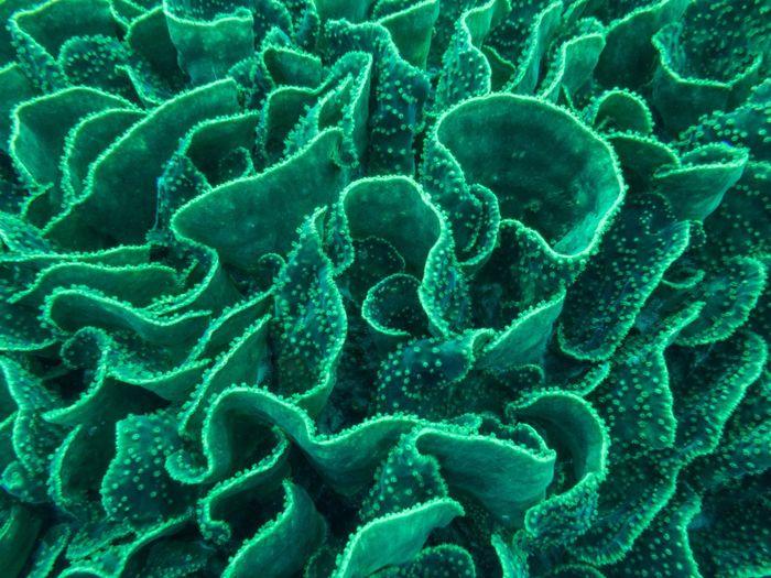 Full frame shot of lettuce coral in sea