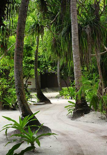 Trees Garden Green Tree Trunk