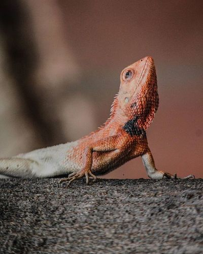 Lizard Animal Themes Animal Wildlife Animals In The Wild Lizard Nature One Animal Outdoors Photography Reptile