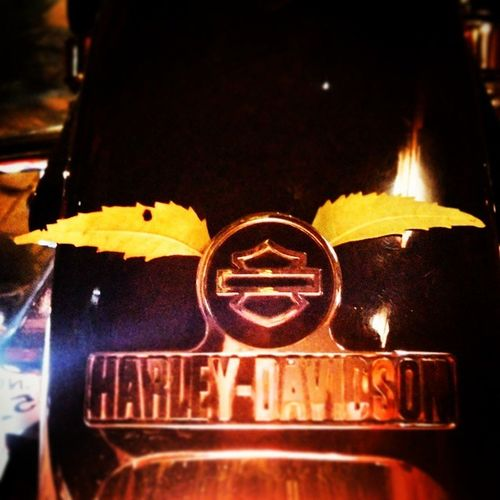 HD Harley Harleydavidson NBHD New Logo Reinvented Logo Leaf