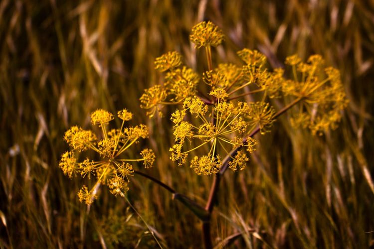 Flowers in a field. Plant Flower Flowering Plant Beauty In Nature Growth Close-up Freshness Nature Focus On Foreground Fragility Vulnerability  Yellow No People Field Land Flower Head Day Inflorescence Petal Outdoors