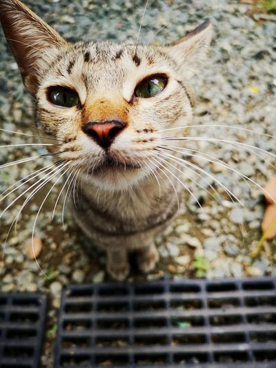 the curious kitty. 😽 Portrait Pets Feline Looking At Camera Close-up Whisker Cat At Home Animal Face