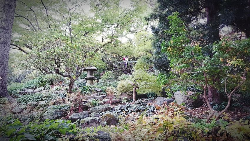 Asian Garden Moments Of My Life @ 私の人生の瞬間。 Mom And Son Mommylife Garden Photography Garden Garden_explorer MomentsToRemember Moments Admiring Nature's Beauty Admiring The View Admiring God's Beauty! Admiring Nature Morris Arboretum