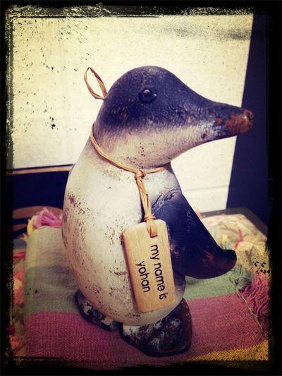 Il regalino di oggi della mia Mammy! Lui è il pinguino che rap-pa!!