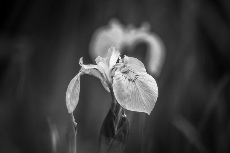 EyeEm Best Shots EyeEm Nature Lover Wildlife & Nature EyeEm Best Shots - Nature Beauty In Nature Black And White Lake Side Walk Light And Shadow Flowering Plant Flower Flower Head Close-up Plant Iris - Plant Pollination