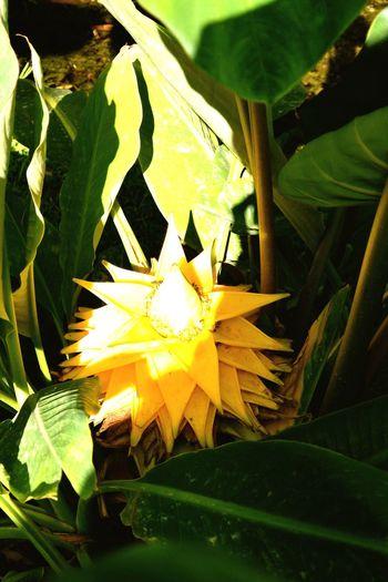 Une très belle fleur jaune Yellow Flower EyeEm Colorful! La Bambouseraie Anduze Holiday Memories South France