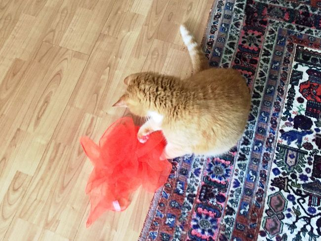 Orange Color Cat Toy High Angle View Silkscarf EmNewHere Playing Cat Motion Silk Scarf Cat Photography Cat♡