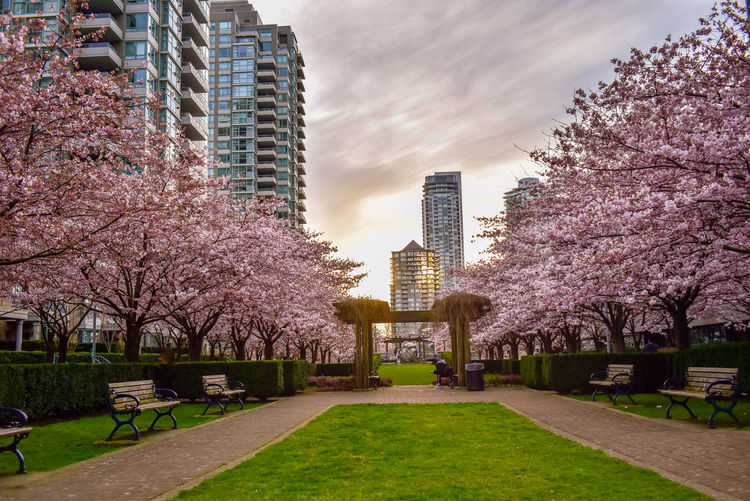 View of trees and buildings in park against sky