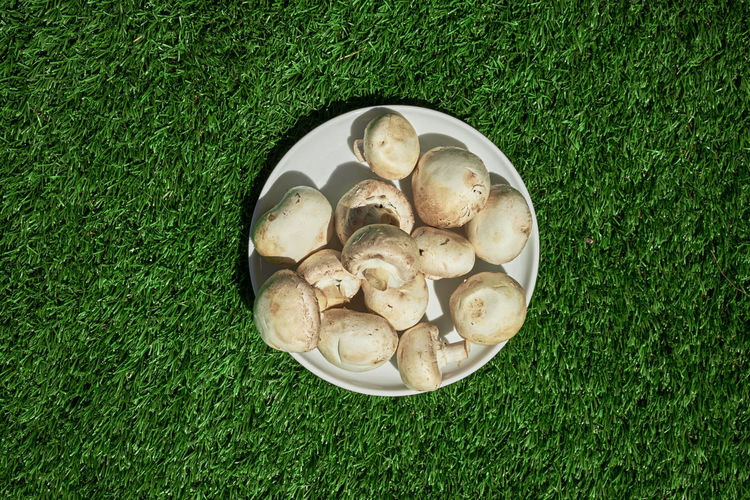High Angle View Of Mushrooms In Plate On Field