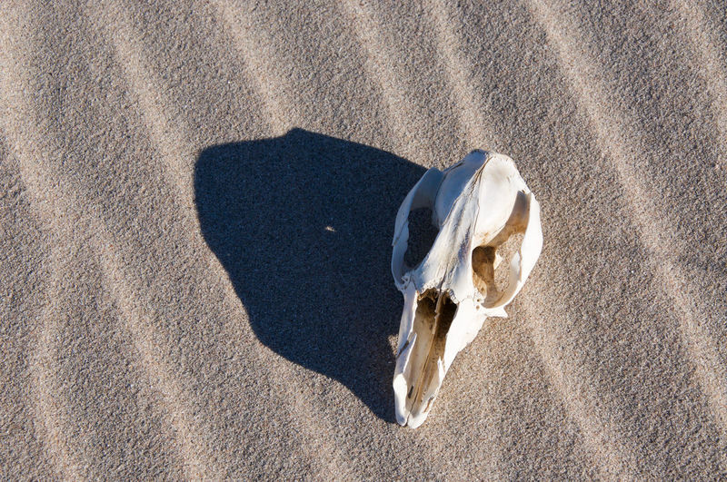 Directly Above Shot Of Animal Skull At Beach