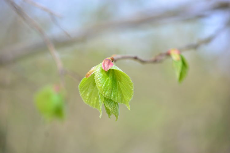 Plant Plant Part Leaf Close-up Beauty In Nature Focus On Foreground Growth Nature Vulnerability  Fragility No People Selective Focus Green Color Day Freshness Beginnings Outdoors Tree Branch Tranquility Leaves Flower