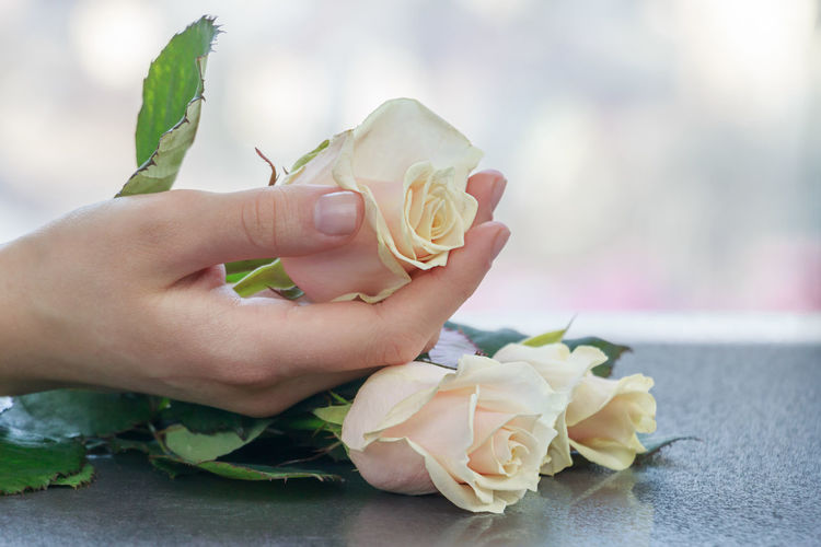 Rose in hand Rose In Hand Pink Rose Blurred Background Blur Background Hand Gift Love Flower Togetherness Bloom Petals Dateday Roses In Hands Separation Bouquet Surprise Roses Flowers Couple Temtation Sadness Date Girl Parting Rosé