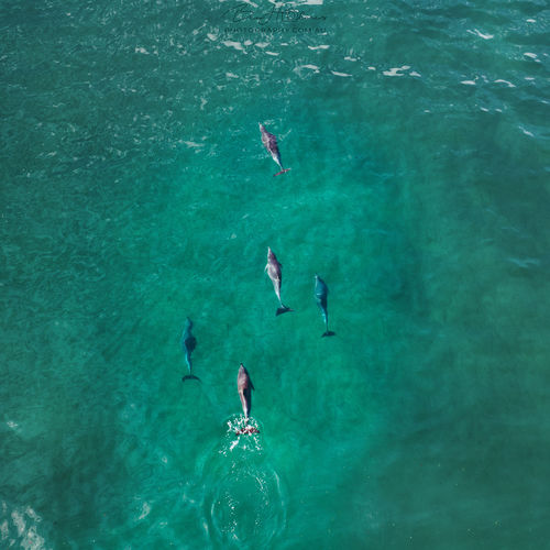 Aerial view of dolphins swimming in sea