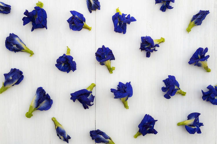 High angle view of purple flowers against white background
