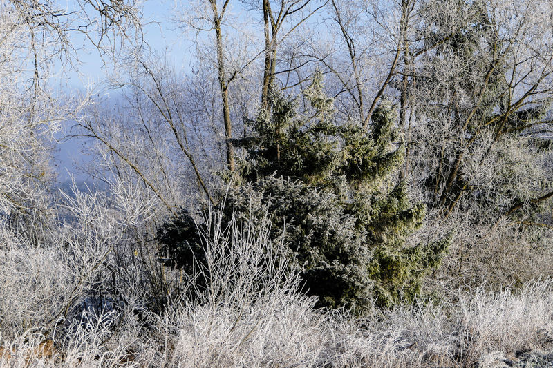 Winterwald Beauty In Nature Close-up Cold Temperature Day Grass Growth Nature No People Outdoors Plant Tree Winter