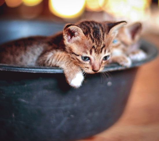 Naughty Cat Cute One Animal Rodent Pets Animal Animal Themes Mammal Cute No People Indoors  Close-up Portrait Animal Wildlife