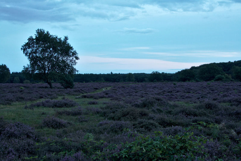 Hoorneboegse Heide Beauty In Nature Day Field Grass Growth Landscape Nature No People Outdoors Plant Sky Tree