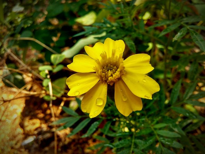 Beauty Of Nature Yellow Flower First Eyeem Photo