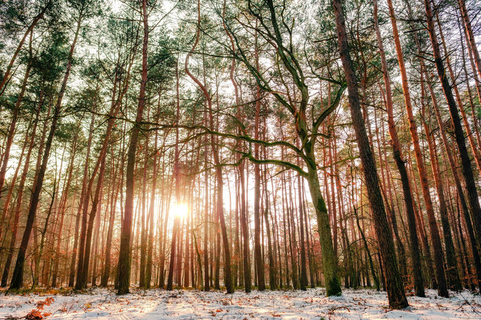 A tree during sunset - woodland landscape. Another short walk into the woods. Beauty In Nature Cold Temperature Forest Photography Glow Natural Light No People Scenic Scenics Scenicsunset Snow Sunset Sękocin Transient Winter WoodLand Woodland Walk