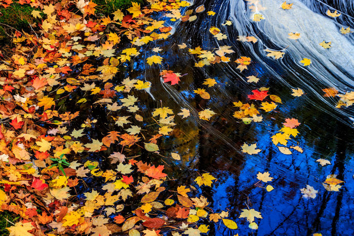 Day Fall Fall Beauty Fall Colors Fall Leaves Nature No People Outdoors Reflections Stream Beauty In Nature Leaves Atumn Fall Collection Cottage Life, Water Reflections Water Reflection_collection Atumn Colors