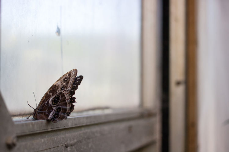 Butterfly on the window Butterfly - Insect Insect Perching Animal Themes Close-up Butterfly