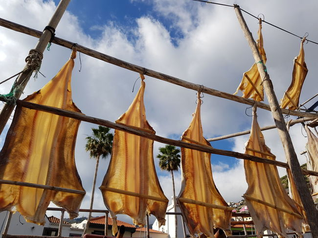 PalmsTrees Blue Color Orange Color Drying Fish Fisherman Cityscape Cityscape Photography Cityscapes_collection Detail Sunlight Hanging Photography Fishing Salt Codfish Sky Clouds Stockfish Bildfolge Madeira Island Vacation Time Sky Outdoors Travel Destinations Day No People Architecture City Cityscape Close-up
