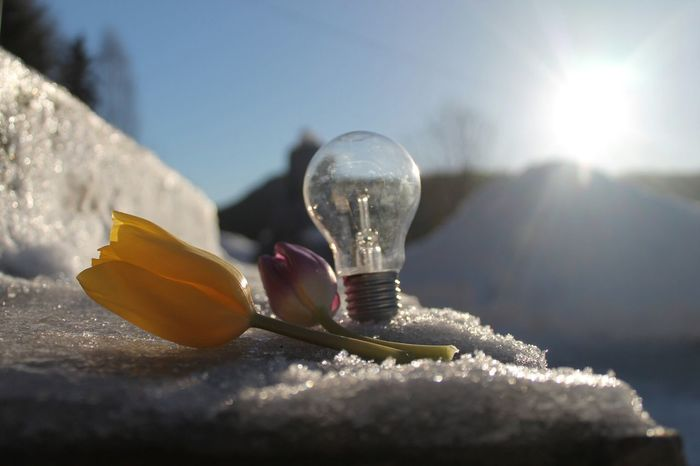 Lightbulb Flower Winter Winter_picsYes