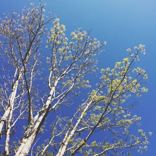 summer Trees Eyeem Philippines