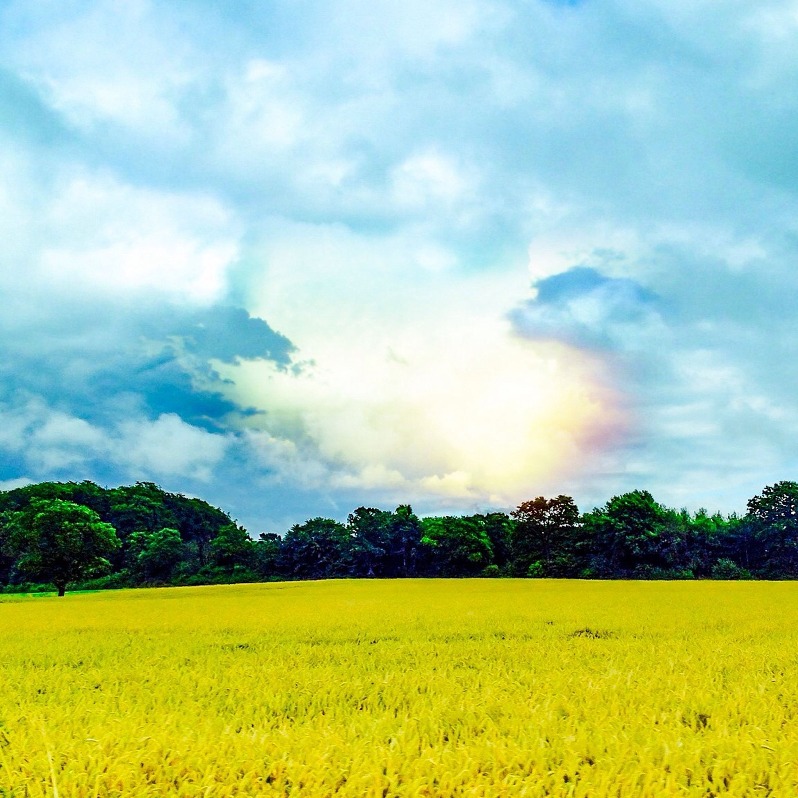 sky, tranquil scene, tranquility, scenics, beauty in nature, yellow, cloud - sky, cloud, nature, landscape, idyllic, tree, cloudy, growth, field, blue, green color, outdoors, no people, rural scene