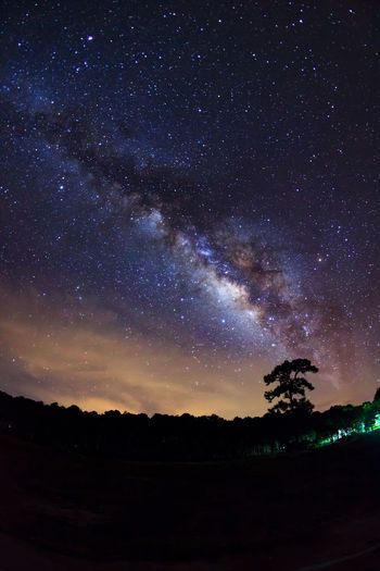 Astronomy Beauty In Nature Galaxy Landscape Milky Way Nature Night No People Outdoors Scenics Silhouette Sky Space Star - Space Starry Tranquil Scene Tranquility Tree