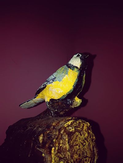 beautiful sculpted musical box Bird Feeder Gold Colored Porcelain Ornaments Colored Background Beauty Studio Shot Close-up Magnification Fly