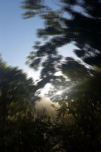 Nature Sunbeam