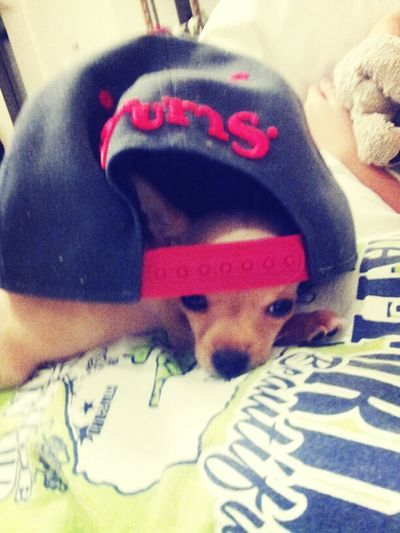 He Think He Cool With The Snapback