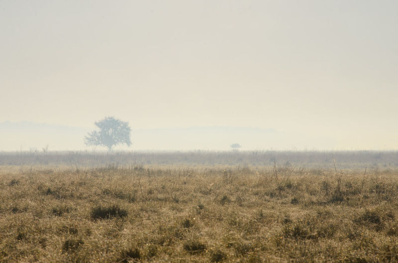 Hazy morning in Hortobagy National Park, Hungary Beauty In Nature Dawn Dew Drops Field Flat Fog Grass Grassland Haze Hortobagy National Park Hungary Landscape Mist Nature No People Outdoors Plain Puszta Rural Scene Scenics Spider Web Steppe Tranquil Scene Tranquility